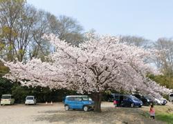 190609_kasen_jiki02.jpg