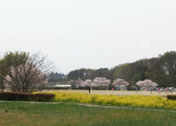 190609_kasen_jiki06.jpg