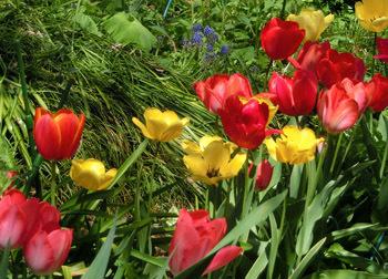 190624_tulip2.jpg