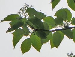 190708_mizuki2.jpg