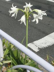 190924_a_hamayu1.jpg
