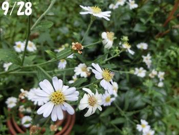 191208_nokon_g1.jpg