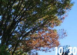 200218_keyaki1.jpg