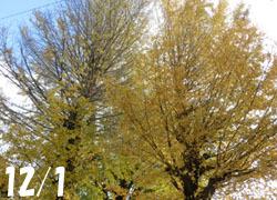 200306_ityo.jpg