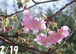 200316_kawadu_z01.jpg