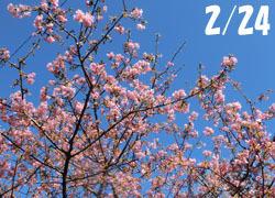 200316_kawadu_z05.jpg