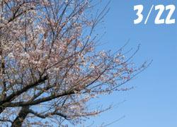 200428_sakura1.jpg