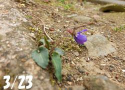 200512_himesumire1.jpg