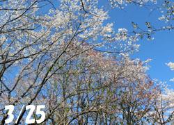 200520_sakura01.jpg