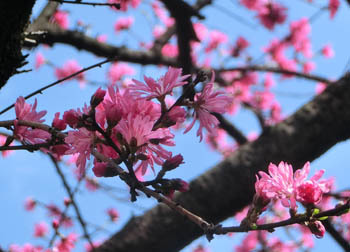 200525_kiku_m3.jpg