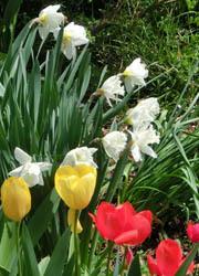 200526_tulip5.jpg