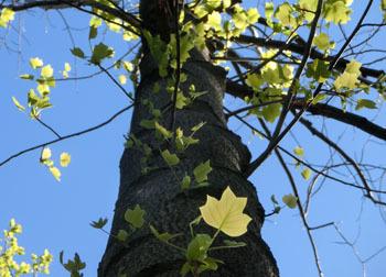 200601_yurinoki2.jpg