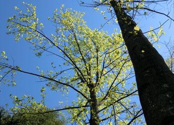 200601_yurinoki4.jpg