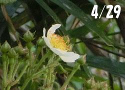 200617_noibara1.jpg