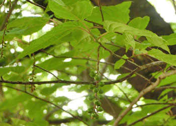 200622_kibusi2.jpg