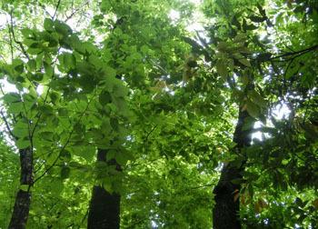 200622_zokibayasi1.jpg