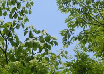 200706_mizuki2.jpg