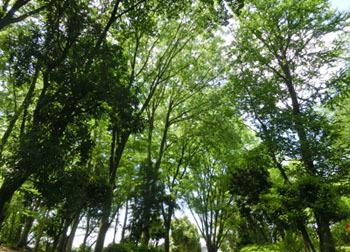 200708_park2.jpg