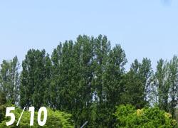 200710_poplar.jpg