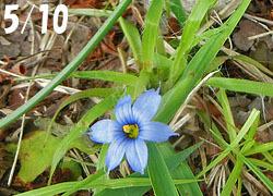 200713_a_niwazekisho1.jpg