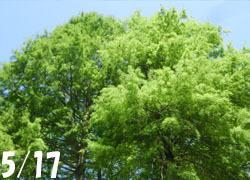 200722_meta_raku1.jpg