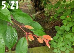 200802_yusura_u1.jpg