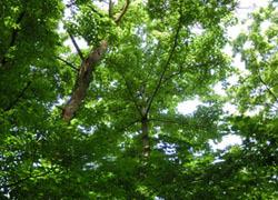 200809_iigiri1.jpg