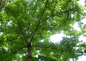 200809_iigiri2.jpg