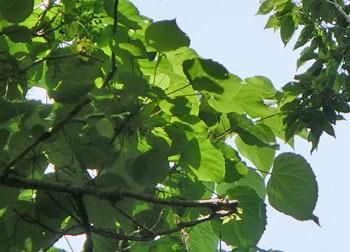 200809_iigiri3.jpg