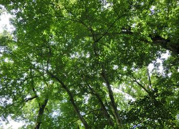 200810_kona_aoh.jpg