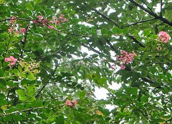 201004_sarusuberi.jpg