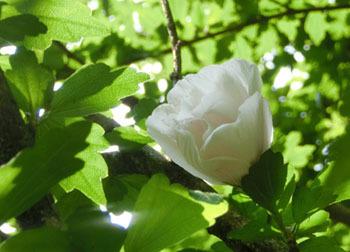 201013_mukuge.jpg