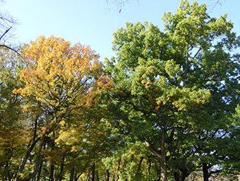 210224_kunugi.jpg